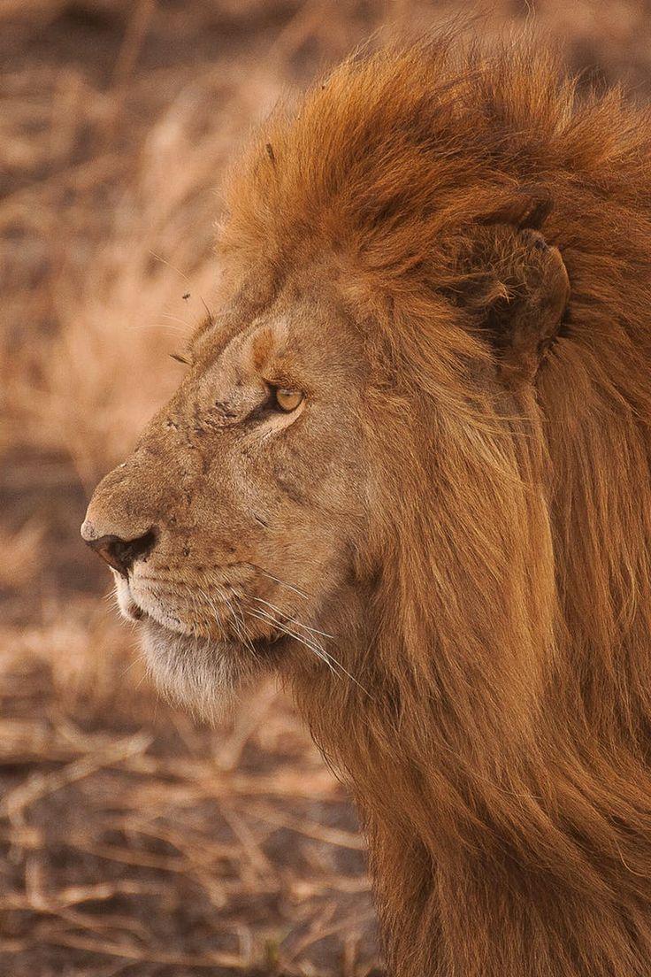 best 25 lion mane ideas on pinterest lion u0027s mane jellyfish