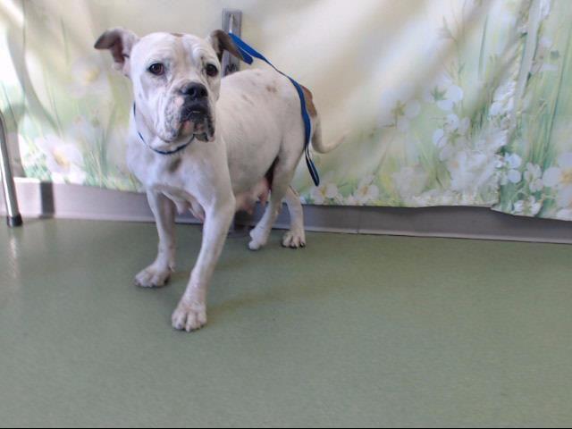 Www Petharbor Com Pet Sbco1 A724968 Pet Adoption Pets Dog Pounds