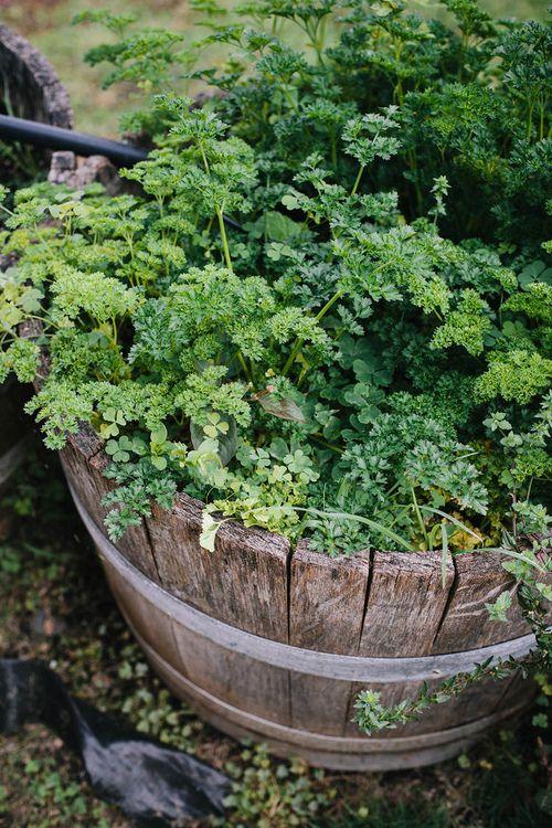 Wild Backyard Herbs : Little herb garden Via SOME WILD THING  Balcony Garden Backyard  P