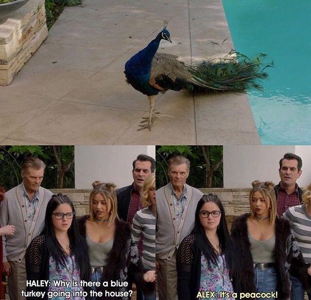 Modern Family. Hailey and the blue turkey