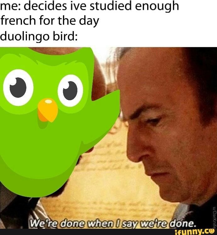 Me Decides Ive Studied Enough French For The Day Duolingo Bird Ifunny Funny Memes Funny Relatable Memes History Jokes