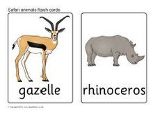 Safari animal flash cards.....great resource when we do our African animal drawings.