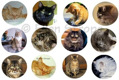 STICKERS, The 12 stickers in this set are all sweet cat images from photosand a painting. Each sticker measures 1.5 inches in diameter. The adhesive on the back of these stickers is repositionable so that you may move them or straighten them if crooked. Stickers make wonderful envelope seals or embellishments for your wrapped gifts, cards, packages, letters or to give as a gift.   These stickersare packaged in a clear sleeve for protection and enclosed in an envelope with cardboard for…