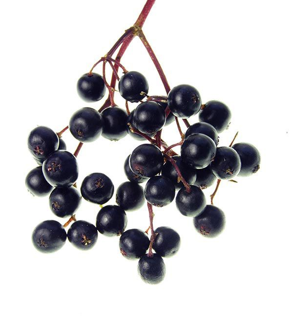 Although some people find them unappetizing raw; with these elderberry recipes you can put the tart, nutritious fruit to good use in jellies, pies, and even wine.