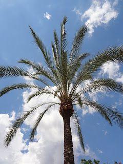 MANIA PODRÓŻOWANIA: /MAJORKA/ W Palmie pod palmą