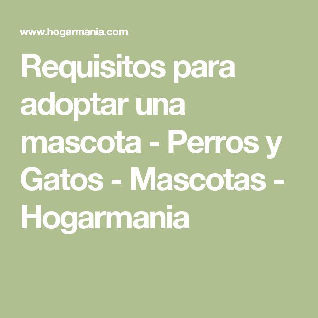 Requisitos para adoptar una mascota - Perros y Gatos - Mascotas - Hogarmania