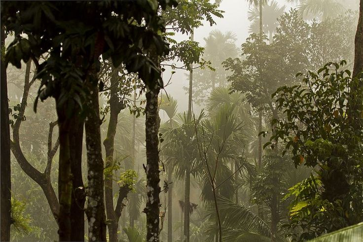 Foggy forest in Agumbe, Western Ghats,India