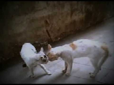 How To Stop Two Cats Fight ? The Best Solution Ever