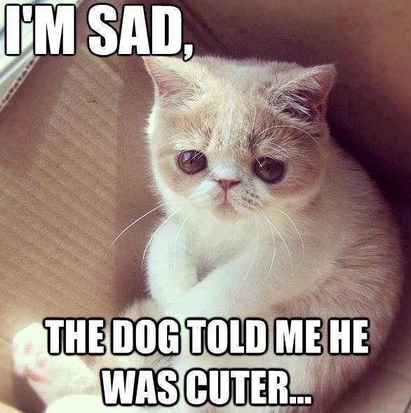 So Sad Cat | Funny Pictures, Quotes, Pics, Photos, Images