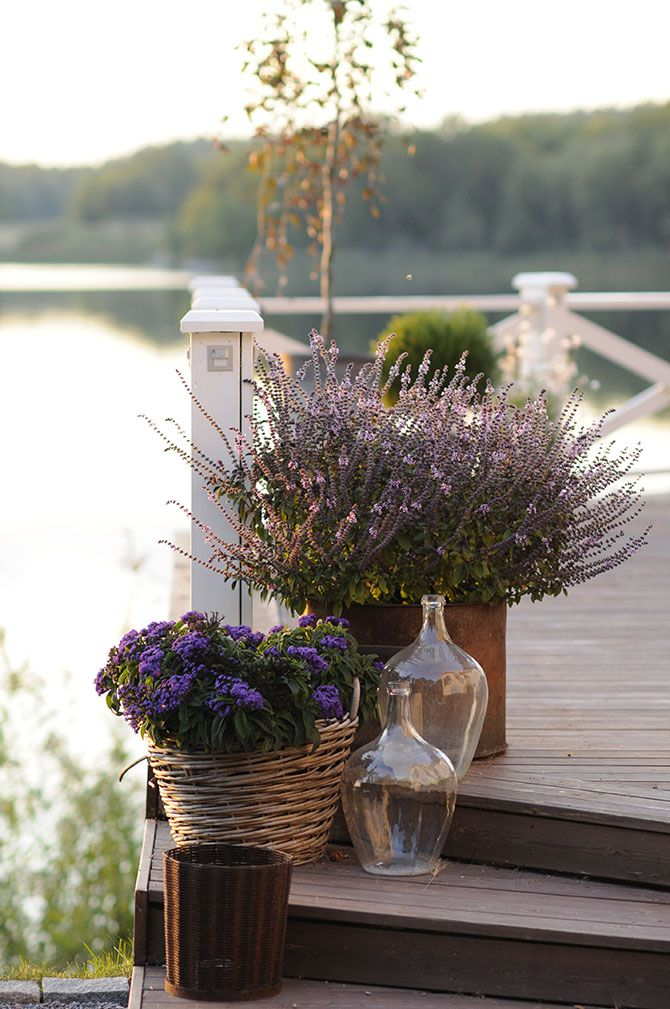 Potted purple plants on a porch with a view....