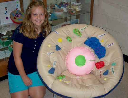 Cell Projects for High School | School seventh grader Victoria Bristow shows off the 3-D cell project ...