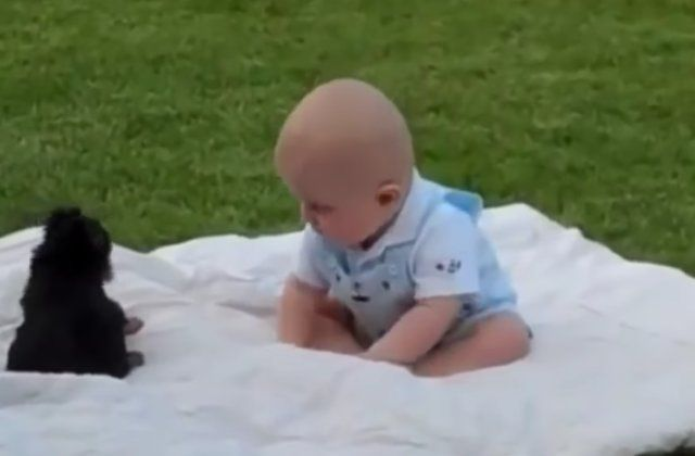 Videos of babies meeting puppies will melt your heart