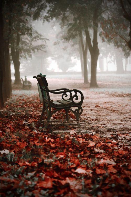 Bank / Gartenbank / Parkbank - Bench in the Park / Garden Bench - Herbst / Autumn / Fall