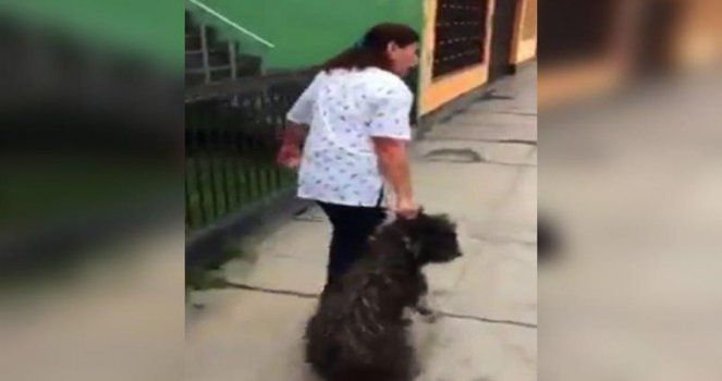 Petition: Stop this vet, they mistreated dogs What the authorities need to do is very simple. Close their veterinary and punish this wife. Let us put an end to this situation, and that justice be done.