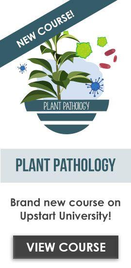 The 25+ best Plant pathology ideas on Pinterest Shade plants - plant pathologist sample resume