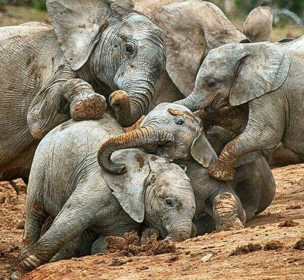 elephants   nature   life on earth