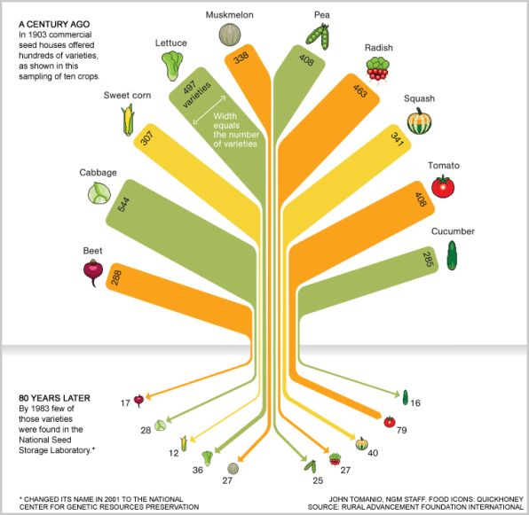 In 80 years we lost 93% of variety in our food seeds