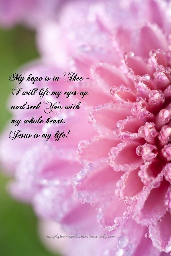 Purple dew drops on flower quotes mightylinksfo