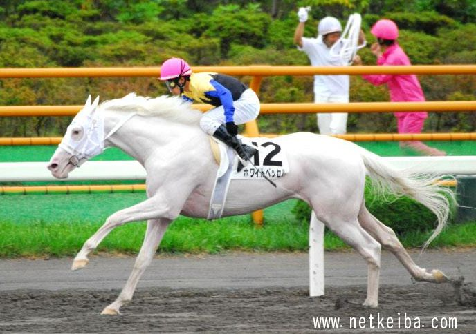 White Vessel in action, full sibling to Yukichan, a very successful white racehorse filly in Japan.