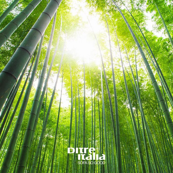 Bamboo is not a wood, it is a kind of grass. It is the plant with the highest growth rate in the world and it can proliferate in any climate condition. Its stems are sawn lengthwise in bends which are then high pressure glued in multilayered panels with oriented fibres, thus granting flexibility and endurance unknown to average wooden panels.