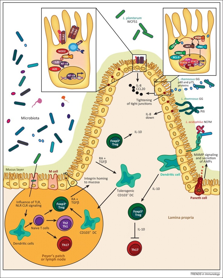 cell bio hw1 Mcb137: physical biology of the cell spring 2017 homework 1: biological numeracy and a feeling for the organism (due 1/31/17) hernan g garcia january 23, 2017.