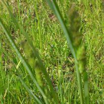 Grass Pollen Allergy- foods to avoid
