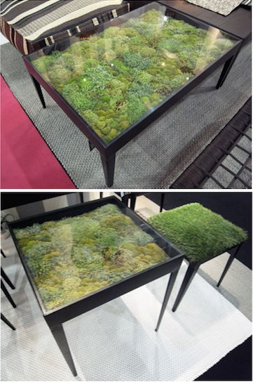 Dried moss under a glass table brings nature inside.
