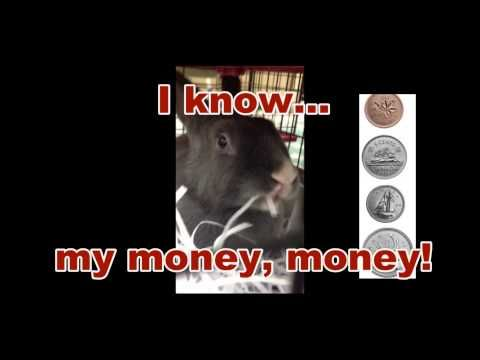 """A video my teacher candidate created for our Pet Rabbit Inquiry about Canadian Coins. She found and downloaded a song on iTunes called """"Hey, Honey Bunny!  I know My Money Money!"""" from the Brainy Beats Album."""