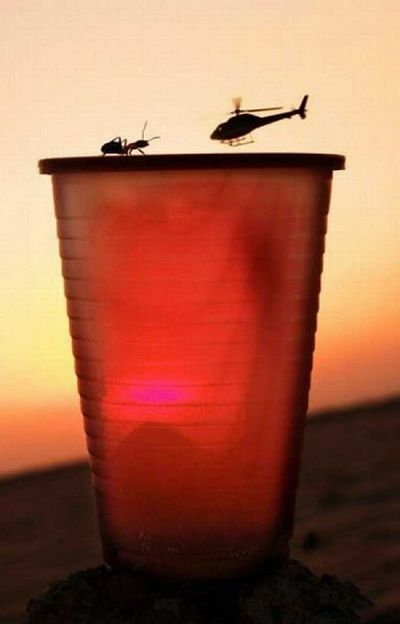 Встреча: Perfect Time Photo, Force Perspective, Optical Illusions, Foto Pin-Up, Funny Pictures, Ants, Funny Photo, Dragon Flying, Faces Off