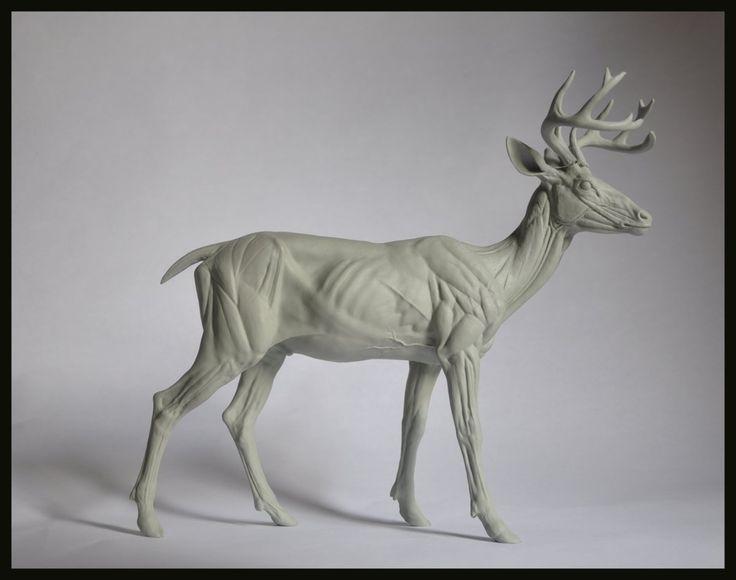 Deer Anatomy Study, steve lord on ArtStation at https://www.artstation.com/artwork/deer-anatomy-study