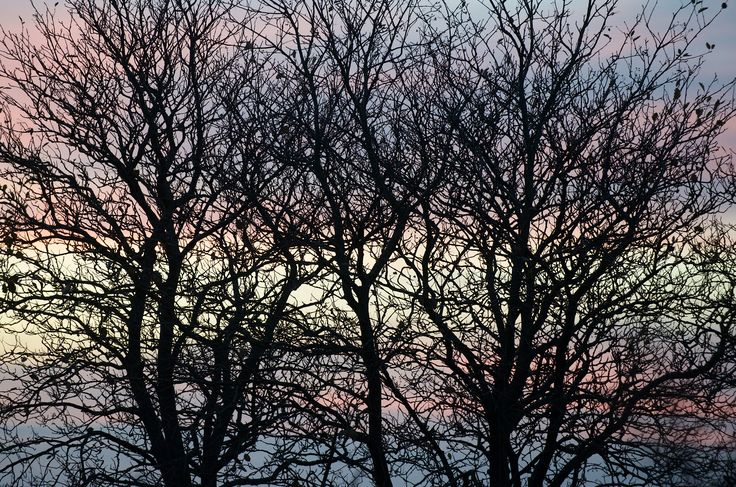 Get my 7 FREE basic photography tips - you need to know · http://pw5383.wixsite.com/free-photo-tips | Photographer Pernille Westh | Trees in a Danish sunset...