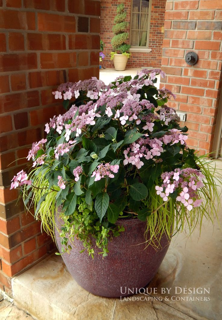 Potted Plants And The Necessary Spring Care: 724 Best #Container #Gardening Ideas Images On Pinterest