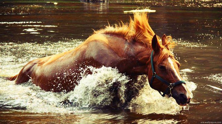 Horse running through water   Paulette Matalas   Pinterest - photo#19