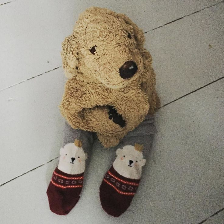 I love these socks. I gave Miss Stanhope all my clementines in exchange for her socks. Bargain  #lovelaughlobilat #sockswag #iwonttakethemoff  #morningglory #6dezember #nikolausstiefel #nikolausgeschenk #hund #perros #welpenalarm #sockenliebe #bearsofinstagram #bearsocks #flauschig #fluffy #fff #sockfetish #mine #plüschie #feelsgood