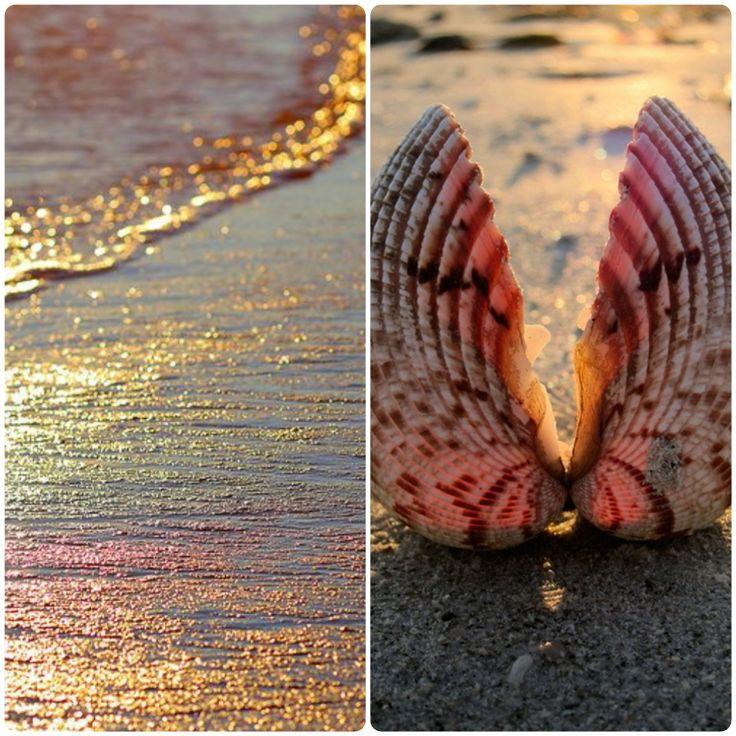 Dor de mare... #seaside #shell #light