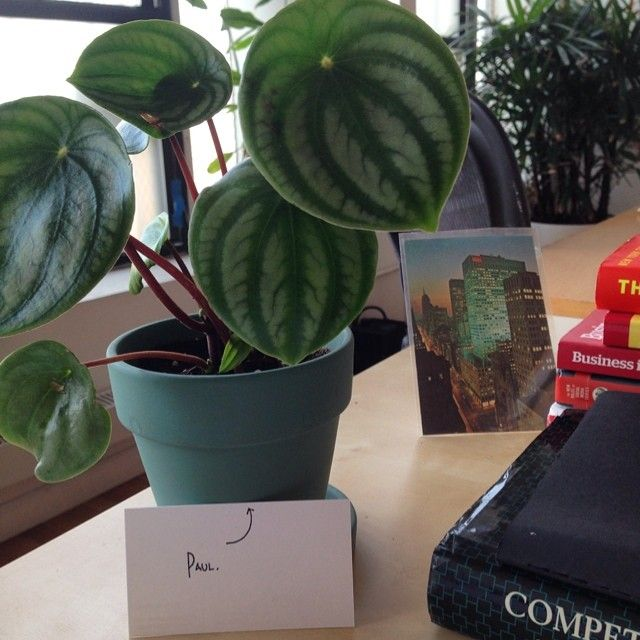 575 best |office plants & desk mates| images on pinterest | office