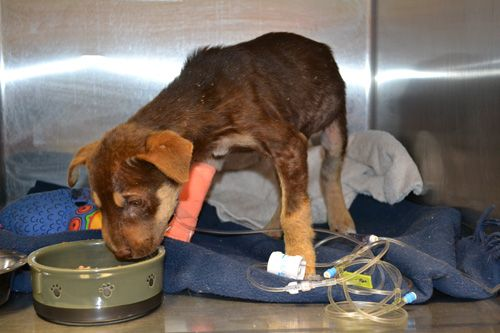 Without foster homes, stray dogs will not survive.  hart - Humane Animal Rescue Team http://www.humaneanimalrescueteam.ca