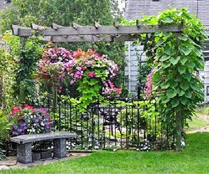 1000 Images About Climbing Vines For Fences On Pinterest