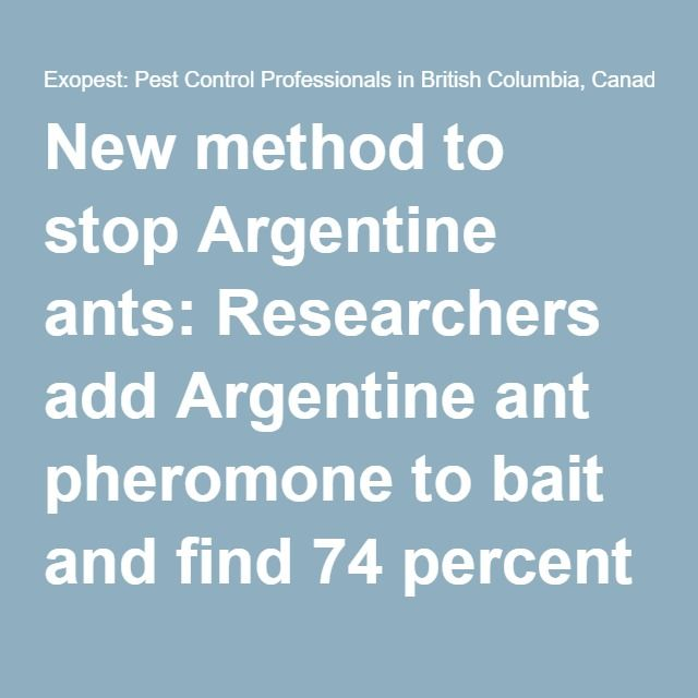New method to stop Argentine ants: Researchers add Argentine ant pheromone to bait and find 74 percent reduction in ant activity • Exopest: Pest Control Professionals in British Columbia, Canada