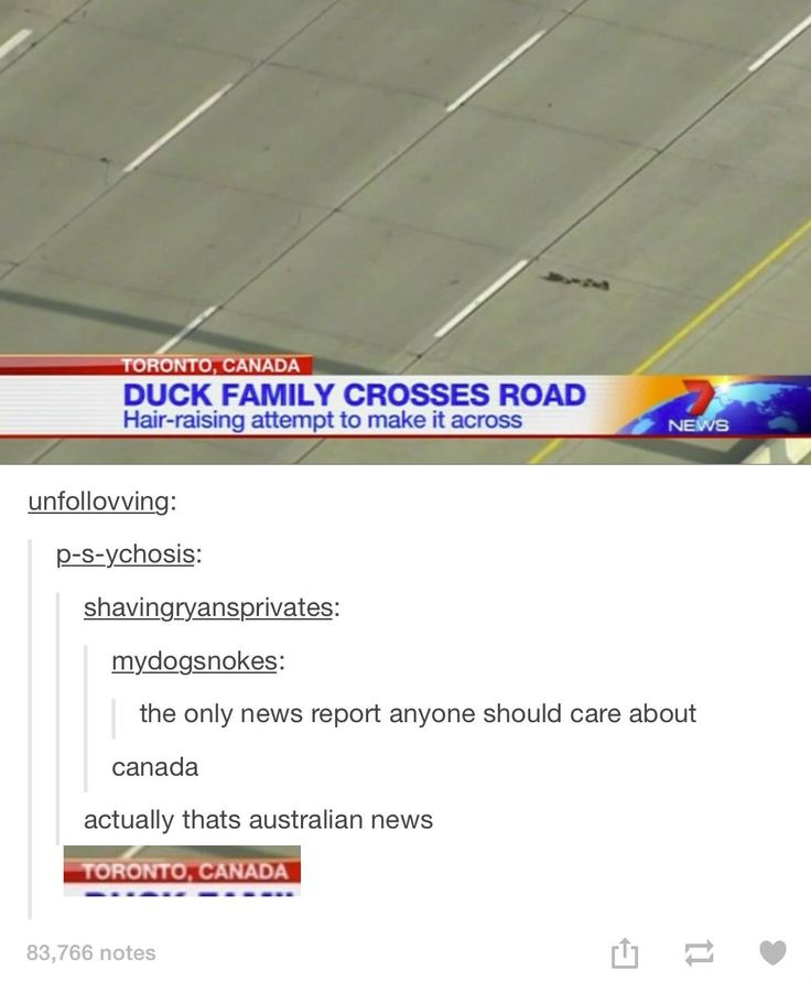 it's an Aussie news channel tho<<< it says TORONTO 《 The location of the ducks was in Toronto, the chanel could be an Aussie chanel.