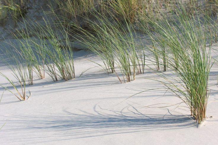 Terschelling-Hoorn-Strand. Duinen met Helmgras.  Www.pieterbroertjes.nl