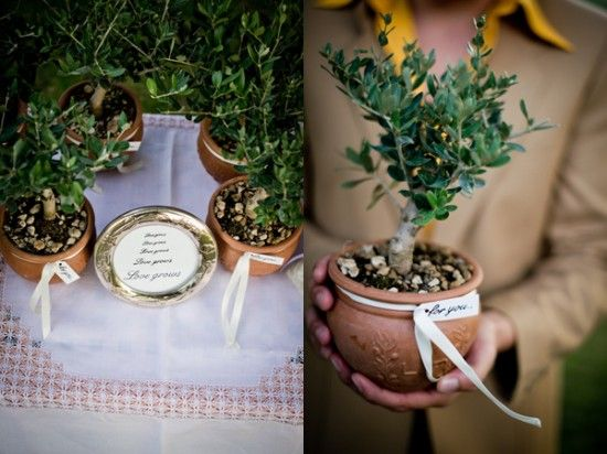 This is probably too expensive with so many guests, but how cute would this be - olive tree favors!