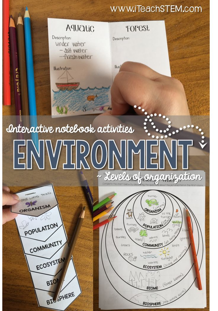 Six science notebook activities that can be used to teach, review and assess students' understanding of biotic factors and abiotic factors and the organizational levels in the environment. A guide and answer key for each activity is included to assist in implementation. Biomes | Abiotic Biotic Factors | Living or Non-living | Ecology | Environment | Interactive Notebooks Science