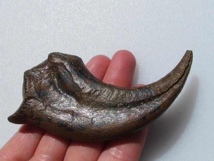 Dinosaur Fossil   Dinosaur Fossil Hand Claw   GreatestCollectibles.com