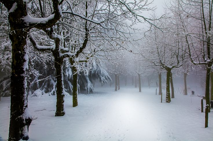 Snowy forest..... Torino, Italy