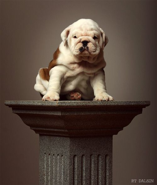 Beautiful things deserve pedestals … but this puppy needs a HUG!!