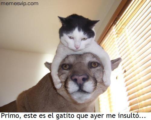 Meme mi primo el de Zumosol #chistes #meme #memes #momos #español #memesenespañol #memesvip #memesvipcom #chistecorto #humor #2017trends #2017 #madrid #barcelona #california #losangeles #mexico #argentina #chicago #sevilla #valencia #newyork #venezuela #colombia  #trending #usa #cat #gato #animals