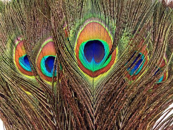 50 Peacock Feathers - naturale piume di pavone (bulk) - venditore di u.s.a.: 1313