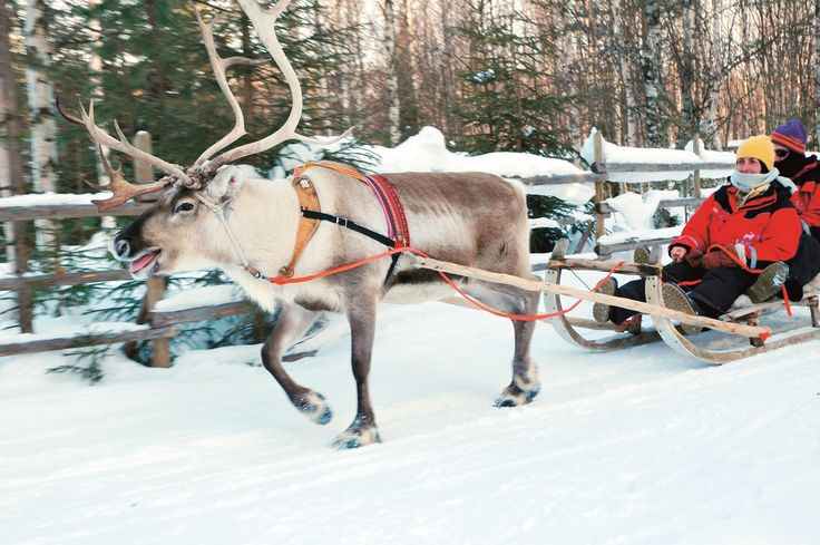 Luosto is a convenient place for a family with activities for every day. A reindeer safari in winter forest, a sleigh safari to an amethyst mine and ice carting. Yet time for skiing on ski-tracks or slopes every day. Photo: Lapland Hotels