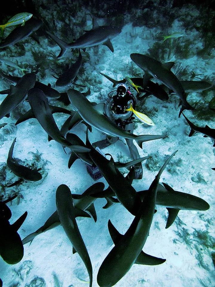 Swimming with sharks @ Shark Hunters